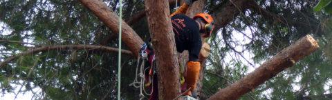 Nos élagueurs grimpeurs interviennent sur tous les types d'arbres.